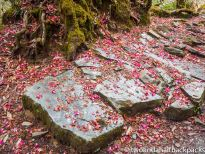 an unbelievable trail covered in flowers