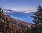 A view across the valley and Rhododendron forest of Dhauligiri