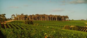 Leeuwin Estate Vineyards