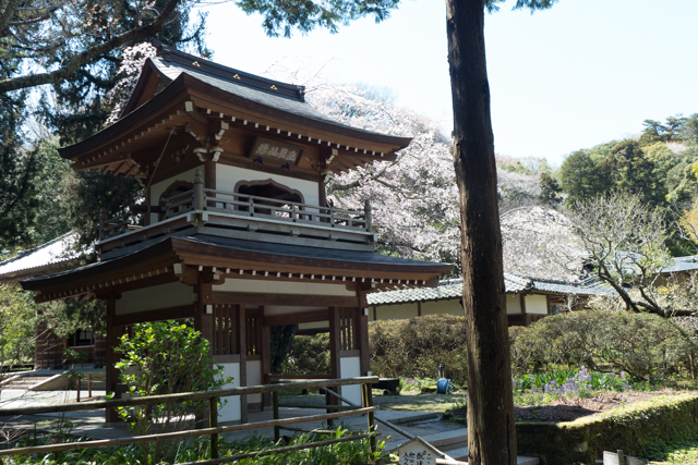 This shrine is within 30 acres of spectacularly beautiful nature park in Kamakura.