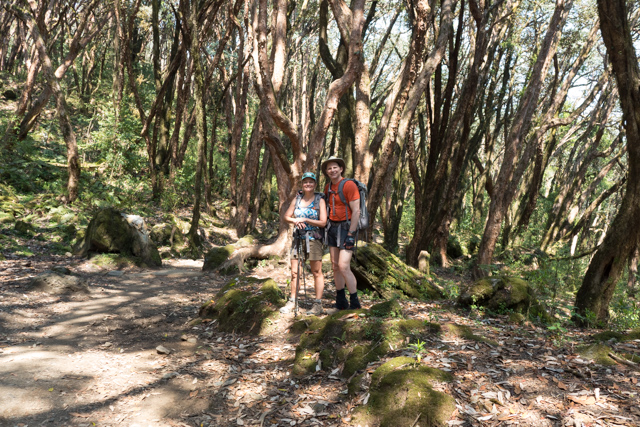 Actually, we are in a Rhododendron forest, if you can believe it.