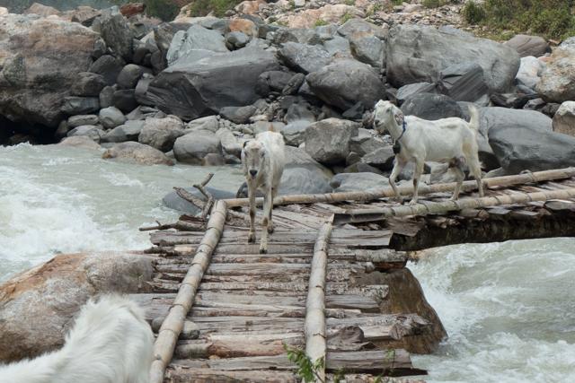 Other users walk across the bridge.
