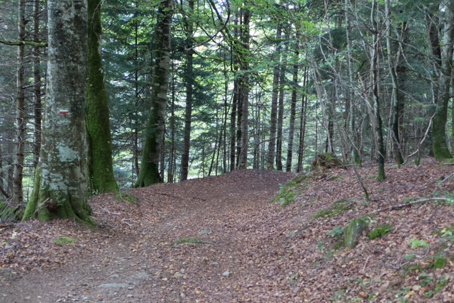 The final part of the trail back to L'hospice de France was leaf covered under a canopy of branches.  We felt like Ralph Waldo Emerson might have felt.