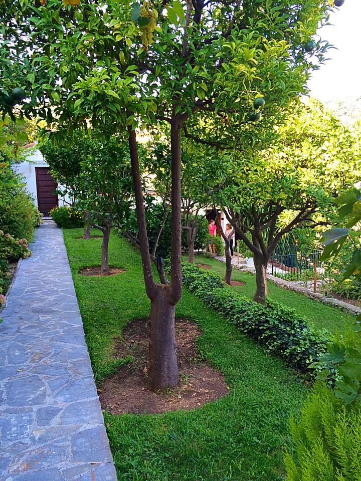 Institut lawn