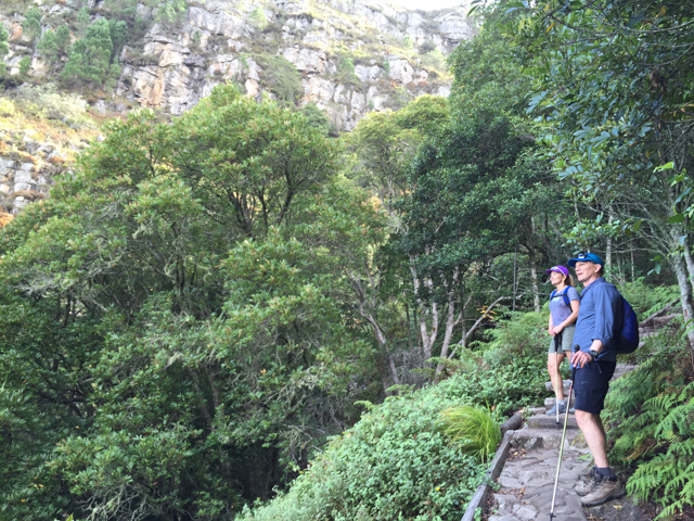 Beginning our ascent of Table Mountain up through a beautiful ecosystem called Skeleton Gorge.