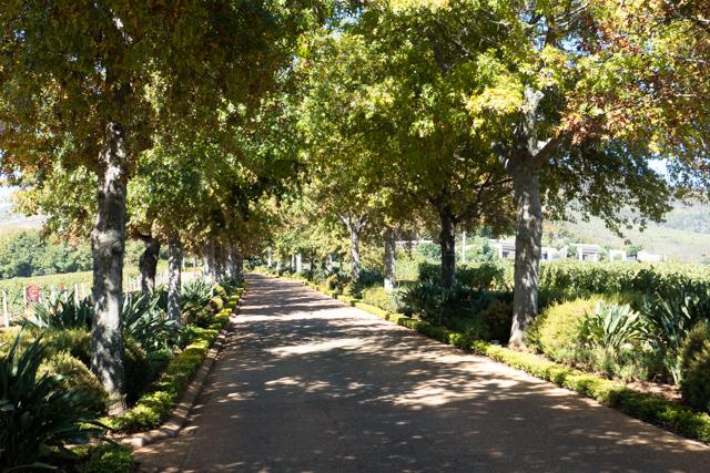 Driveway to the Delaire Graff Estate winery.