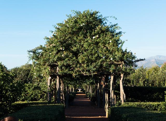 The arbors in Babylonstoren's  garden were numerous and overflowing.