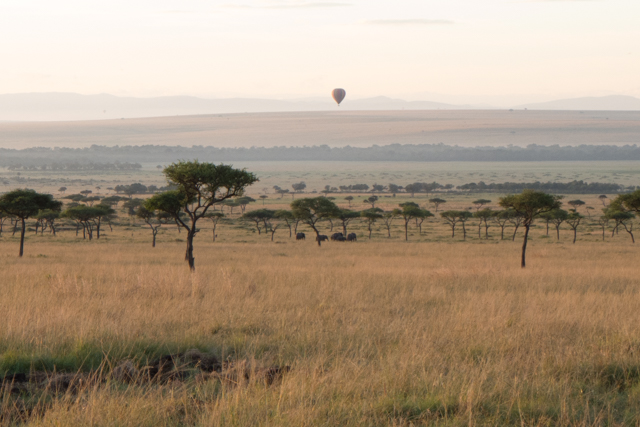 On an early morning game drive down in the Mara.