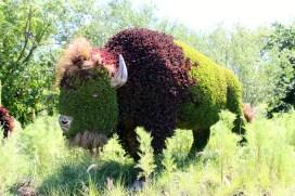 Mother Earth's buffalos.