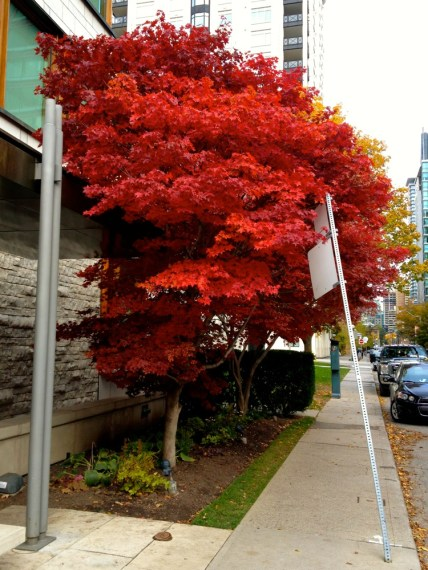 Loving the fall colours about the place