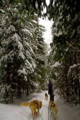 Through snow-covered tree corridors
