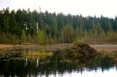 Beaver Lake. Do you think that's a beaver dam?