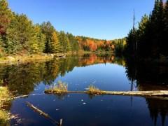 A lake where a couple of beavers live