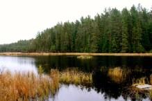 A beaver's home