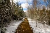 Along the Spruce Bog path