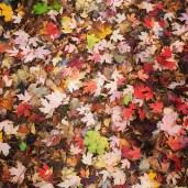 Leaves in Trinity Bellwoods