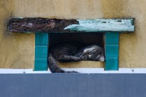 Sleeping Cat in a Ceramic Roof