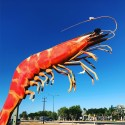 Big prawn!