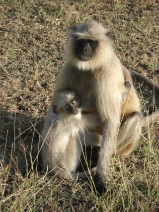 Macacos soltos pelo forte e posando para mim