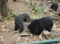 Área de proteção e para cuidar dos ursos