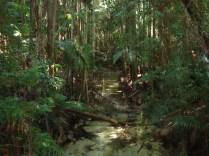 A ilha tem inúmeras fontes de água pura, potável, cristalina.