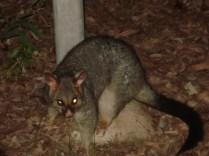Primeira noite, nosso visitante. Esses olhos são por conta do flash. Ele não é demoníaco