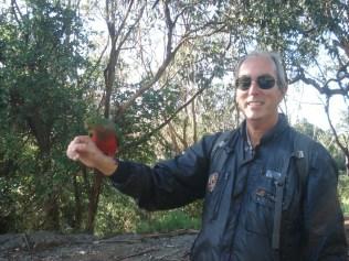 Carlos, o encantador de periquitos australianos