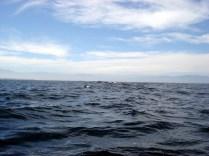 E depois de um mar agitado e muita correria vimos alguns golfinhos nadando