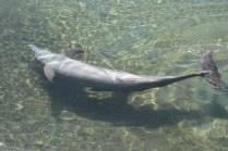 Golfinho fazendo onda no Centro dos Golfinhos do Intercontinental