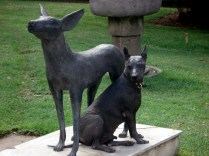 Xoloitzcuintle é uma raça canina que vale uns 2.000 dólares por serem muito raros