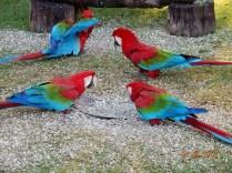 Aguardando o passeio é possível ver os pássaros sendo alimentados