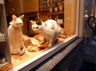 Cat eating croissant in window display
