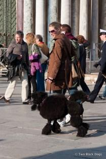 Posh poodle, Venice