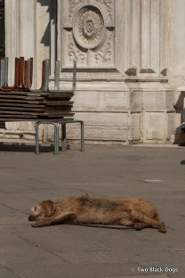 Soaking up the sun, Venice