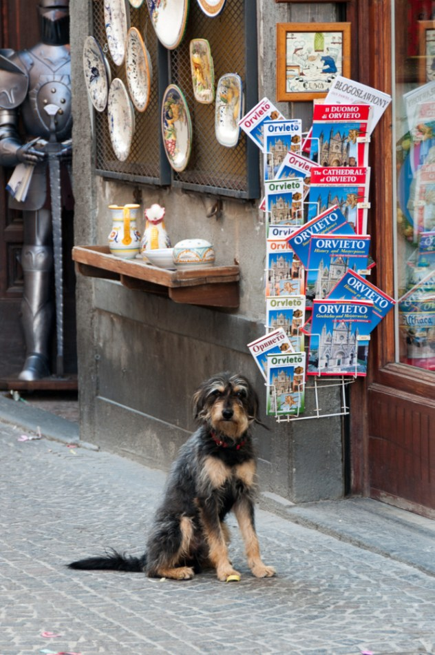 Patient dog outside a souvenir shop