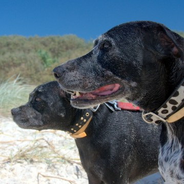 Two black dogs at the beach, March