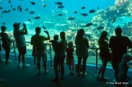 Shark Bay at Sea World