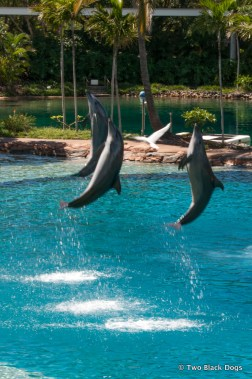 Dolphins on show