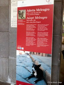 Stray dog adoption program, Pompeii