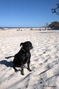 Bundy at the beach