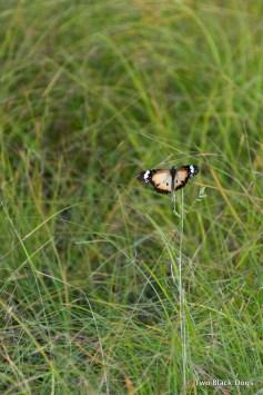 ButterflyJuly