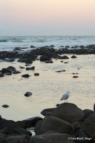 Seagull by the water at dusk