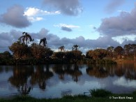 birds roosting in trees in the middle of the pond