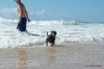 Bundy the dog in the surf