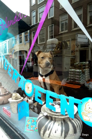 How much is that doggy in the window? Amsterdam