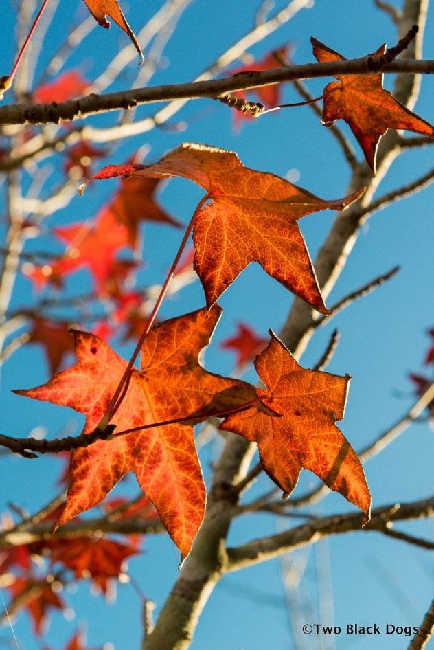 The last of Autumn colour