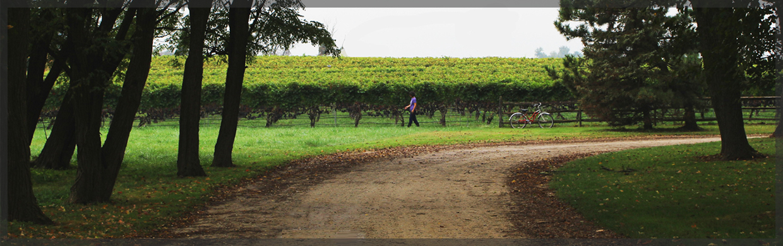 Auburn Winery