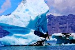 Icebergs brilliantly transmitting the most lovely shade of blue.
