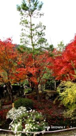 Flaming red trees