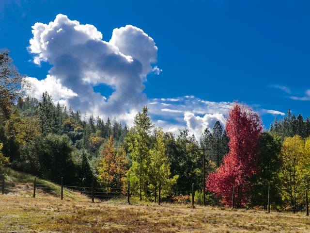 Dramatic clouds in deep blue sky with colorful fall trees and pine trees along a pasture